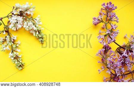 Lilac. A Branch Of Purple And White Lilac On A Yellow Background. Lilac Blooming View From Above. Sp