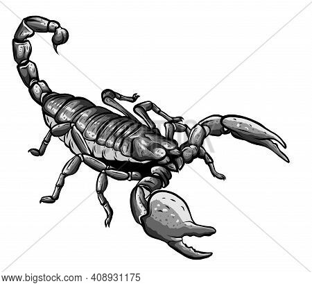 Monochromatic Illustration Of Scorpion Arachnid Insect. Vector Graphics