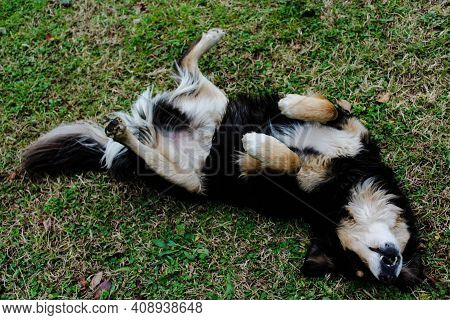 Cute Homeless Black And White Dog Lying In The Park In Natural Environment
