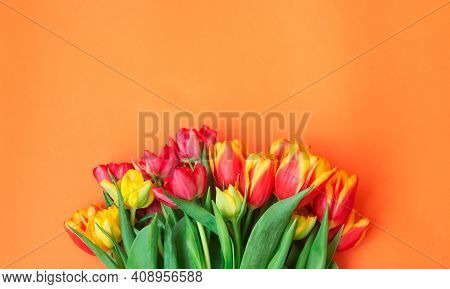 Colorful Spring Tulip Flowers On Orange Background. Top View, Copy Space.
