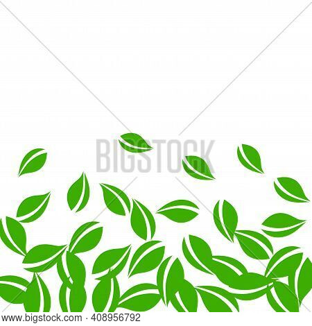 Falling Green Leaves. Fresh Tea Neat Leaves Flying