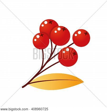 Rowan Tree Branch With Leaves And Berries. Vector Illustration Isolated On A White Background. Mount
