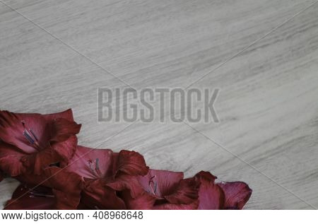 Beautiful Gladiolus Flowers Bouquet With Copy Space