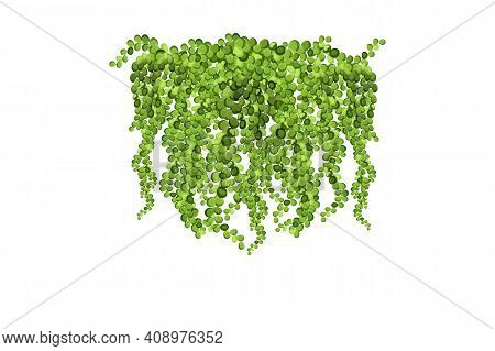 Green Vine, Liana Or Ivy Hanging From Above Or Climbing The Home.decoration For Garden Or Home.