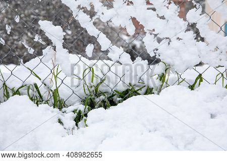 Winter Morning Snow Covered Green Growing Grass On The Street Of Athens, Greece, 15th Of February 20