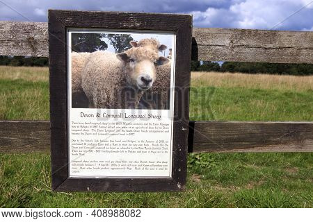 Saint Austell (england), Uk - August 19, 2015: Devon & Cornwall Longwool Sheep Sign In The Lost Gard