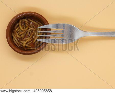 Mealworms Or Tenebrio Molitor For Human Consumption Entomophogy