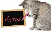 Cute cat holding a pink pencil writing on a menu board poster