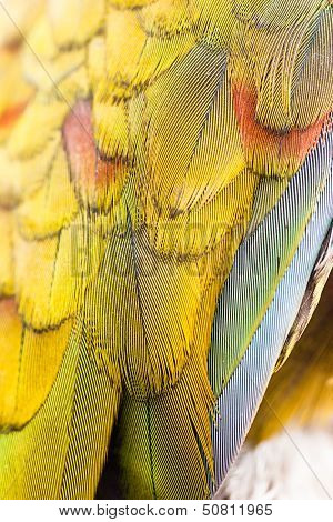 Colorful Macaw Plumage Closeup