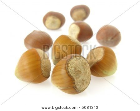 display of whole uncracked hazelnuts in back-lit setting poster