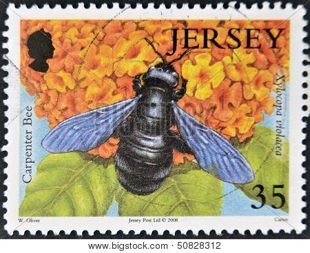 JERSEY - CIRCA 2008: A stamp printed in Jersey shows carpenter bee xylocapa violacea circa 2008