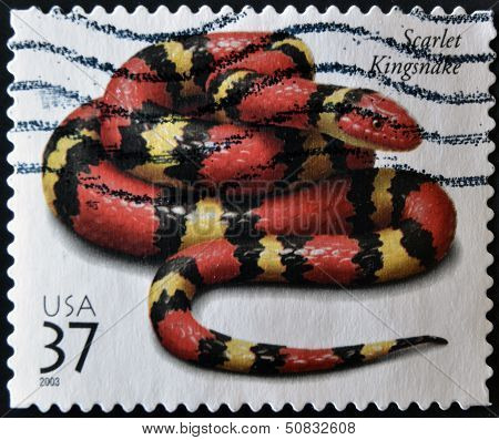 United States Of America - Circa 2003: A Stamp Printed In Usa Shows A Scarlet Kingsnake, Circa 2003