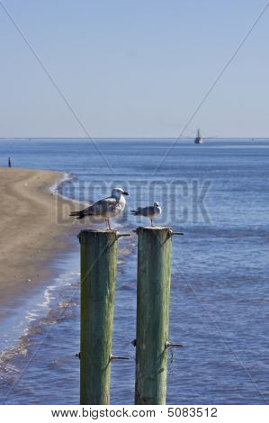 Seagulls on two posts with a shrmp boat in the background poster