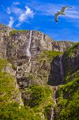 Waterfall in Fjord Sognefjord Norway - nature and travel background poster