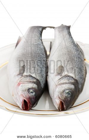 Two seabass fish on a white plate on a white background. poster