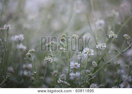 Wildflowers In Morning Sun Light