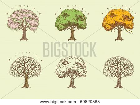 Set of trees at engraving style.