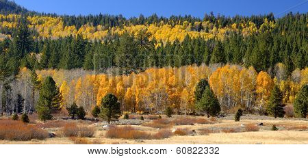 Fall In Hope Valley, California