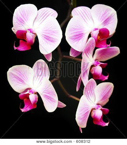 Vier Orchideen