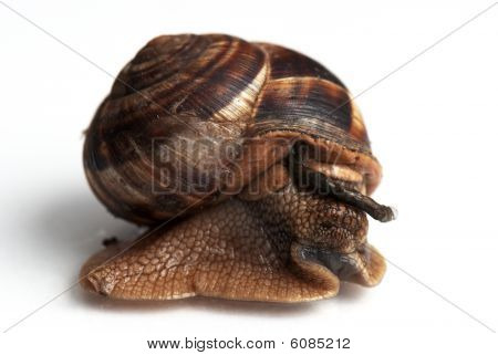 Snail defecating and eating