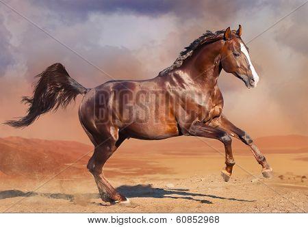 horse running in the desert