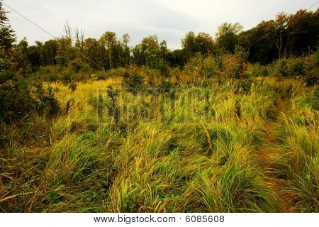 Autumn Meadow With High Grass