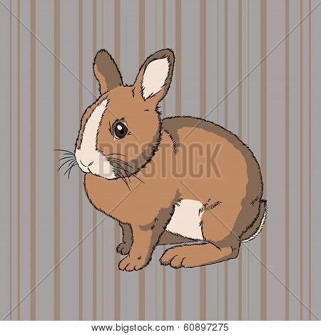 poster of Vector illustration of fluffy brown  sitting rabbit on striped background