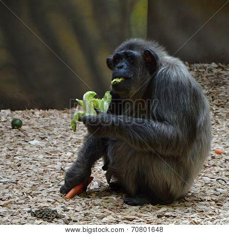 Eat monkey