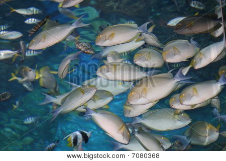 Tropical fish, Siam ocean world, Bangkok, Thailand.