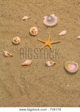 Coisas na praia