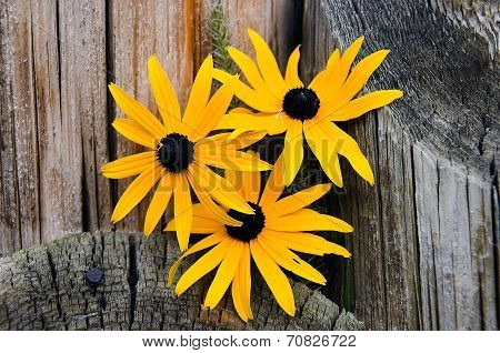 Black-eyed Susan bouquet