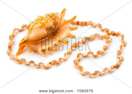 Necklace Made Of Sea Shell