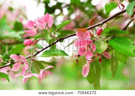 Beautiful blossom outdoors