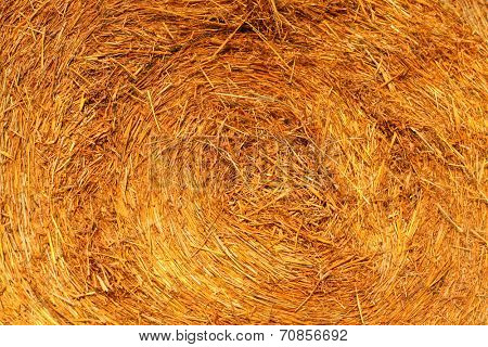 Abstract background texture of golden dry yellow grass, straw and hay outdoor on rural meadow in autumn evening nature. Grunge cultivated structure of closeup roll view at light farm with white center