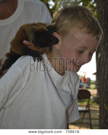 laughing boy with great expression as lemur bites ear poster
