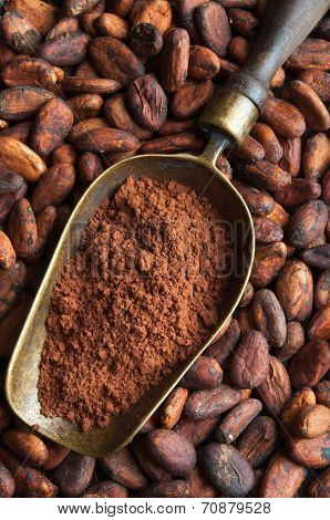 Cocoa Beans And Retro Scoop With Cocoa Powder