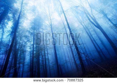 Blue Twilight Mood In A Foggy Wood