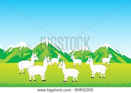 Herd sheep in field