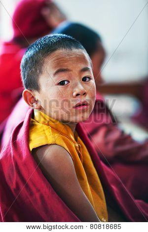 Novice Monk, Nepal