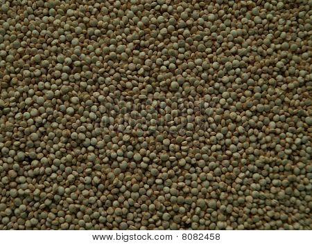 Closeup of quinoa seeds