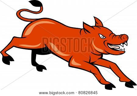 Angry Pig Jumping Attacking Cartoon