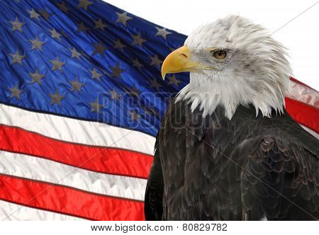 American flag and Bald Eagle, symbols of freedom and democracy