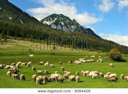Rural Landscape In Highlands Of Romania