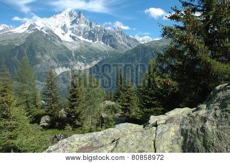 Rock, Trees And Peaks Nearby Chamonix In Alps In France