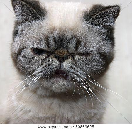 Angry Kitten.