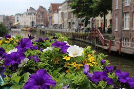 Flowers in Ghent Belgium