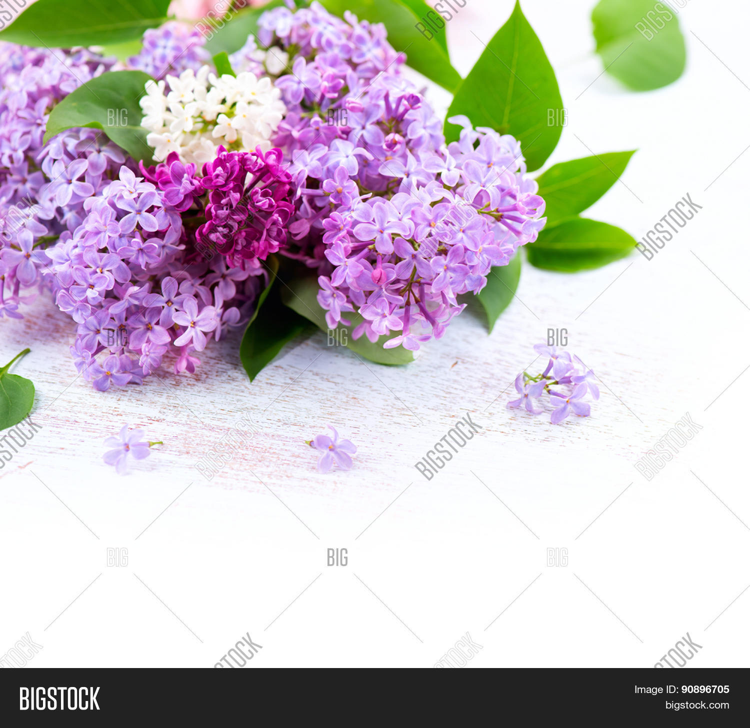 Lilac flowers bunch over white image photo bigstock lilac flowers bunch over white wooden background beautiful violet lilac flower border design closeup mightylinksfo