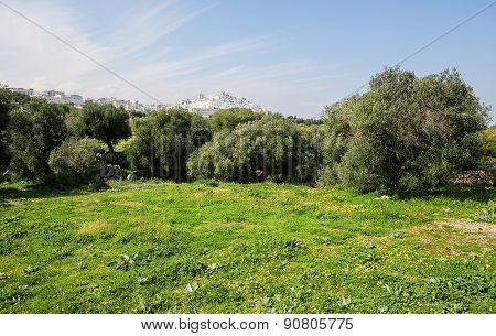 View On The Center Of Ostuni, Puglia, Italy