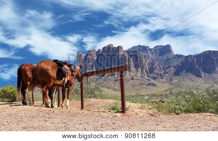Wild West Town Horses tied to post