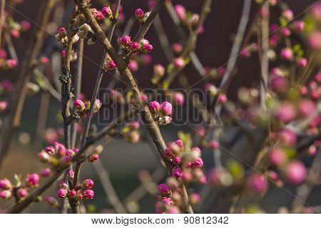 Decorative Almonds Buds